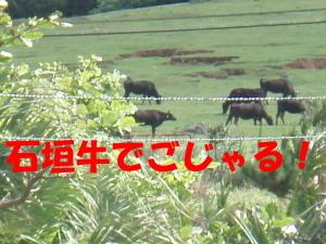 ランチ5.jpg
